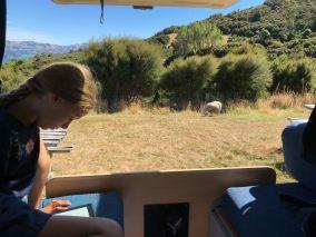 Instant lecture dans le van, à la ferme - Akaroa - Banks Peninsula - Nouvelle-Zélande