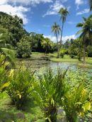 Jardin d'eau - Tahiti - Polynésie