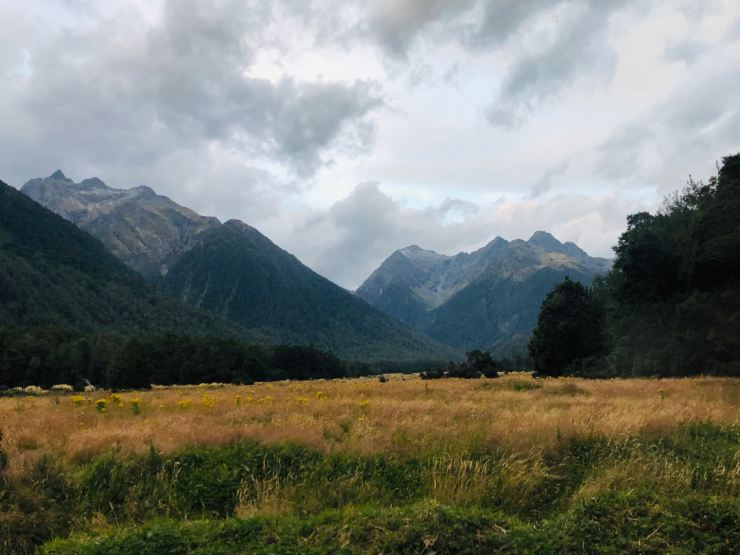 Champ de blé et début des fjords - Fjordland - Nouvelle-Zélande