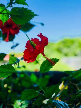 Jolie fleur exotique - Jardin d'eau - Tahiti - Polynésie