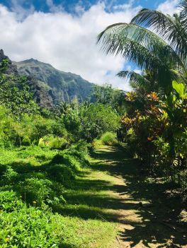 Chemin royal - Vallée d'Hakaui - Nuku Hiva - Iles Marquises - Polynésie