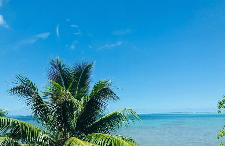 Cocotier et bleu turquoise - Moorea - Polynésie