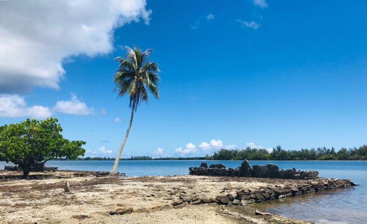 Marae et Palmier- Huahine - Polynésie