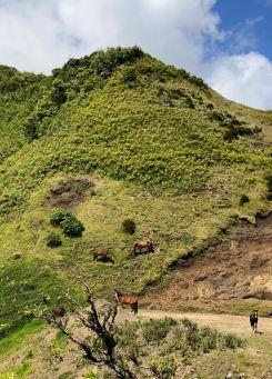 Chevaux sauvages - Sur la route - Nuku Hiva - Iles Marquises - Polynésie
