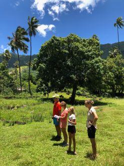 On écoute le guide (du routard) - Dans les sites archéologiques en amont d' Hitaheu - Nuku Hiva - Iles Marquises - Polynésie