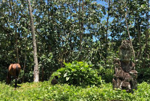 Grand tiki et cheval - Dans les sites archéologiques en amont d' Hitaheu - Nuku Hiva - Iles Marquises - Polynésie