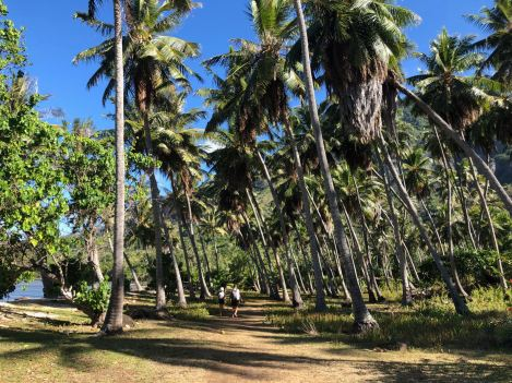 Cocoteraie dans la baie d'Anaho - Nuku Hiva - Iles Marquises - Polynésie