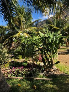 arbres à fleurs et à fruits dans la baie d'Anaho - Nuku Hiva - Iles Marquises - Polynésie