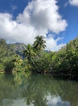 Baie d'Hakaui, nous remontons la rivière - Nuku Hiva - Iles Marquises - Polynésie