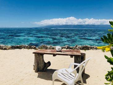 Face à la mer - Lagoonarium - Moorea - Polynésie