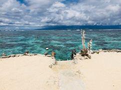 Coquillages et vue sur Tahiti pour accéder au lagon - Lagoonarium - Moorea - Polynésie