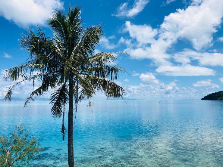 Lagon et Palmiers au Sud de l'île - Huahine - Polynésie