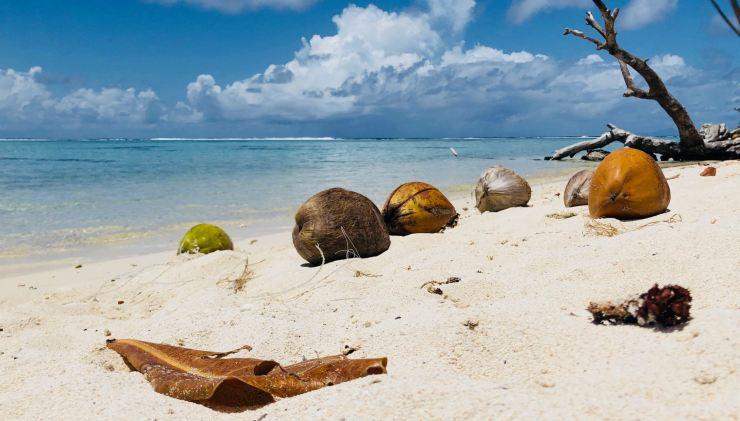 Village en noix de coco sur la plage - Motu Ofetaro - Raiatea - Polynésie