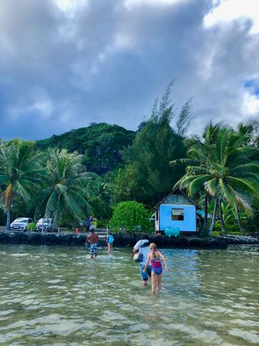 Retour du Lagoonarium - Moorea - Polynésie