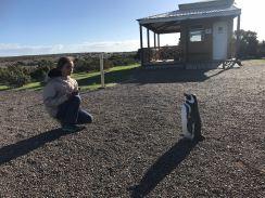 Rencontre - Punta Tombo - Argentine