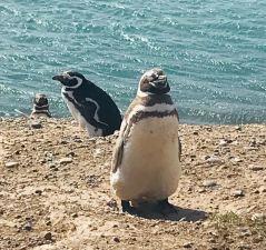 Elle était bonne la pêche ? - Punta Tombo - Argentine