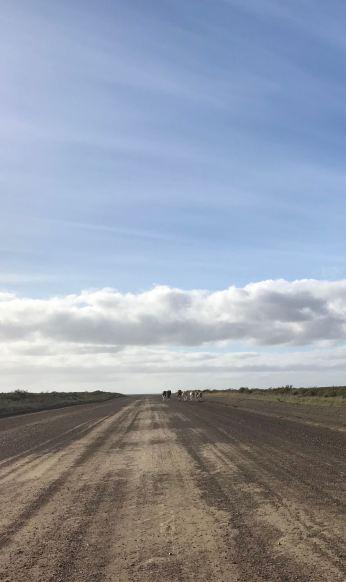 Les pistes de la péninsule Valdes - Argentine