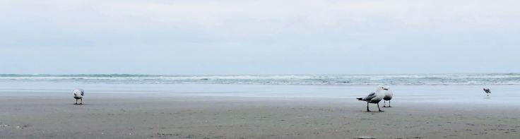 Salut les mouettes - Muriwai Beach - Nouvelle-Zélande
