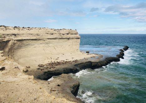 Colonie de Lions de mer - Péninsule Valdes - Argentine