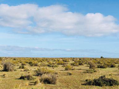 La lande désertique - Péninsule Valdes - Argentine