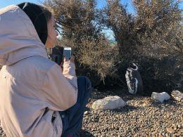 Salut c'est pour un reportage, sur Make Me Dream - Punta Tombo - Argentine
