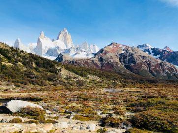 Flore de Patagonie et Fitz Roy en toile de fond - El Chaltén - Argentine