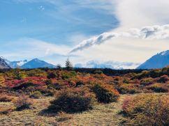 Flore de Patagonie - treck du Fitz Roy - El Chaltén - Argentine