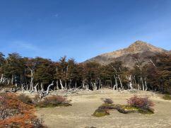 Etranges arbres - Treck du Fitz Roy - El Chaltén - Argentine
