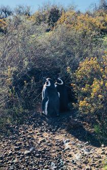 Viens Gérard, on s'en va ! - Punta Tombo - Argentine