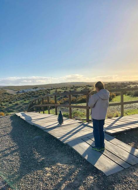 Allez, je te prends en photo ! A Punta Tombo - Argentine