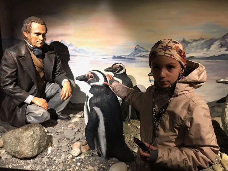 Mignons Manchots - Museo de Historia Fueguina - Ushuaïa - Terre de Feu - Argentine