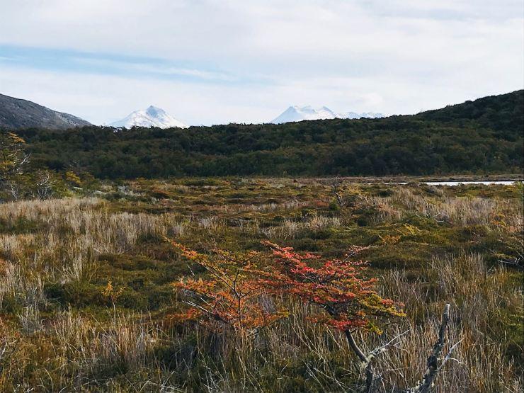 Steppe - Parc National de la Terre de Feu - Argentine