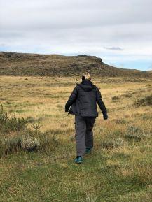 Bougez pas les guanacos, j'arrive ! - Torres del Paine - Patagonie - Chili