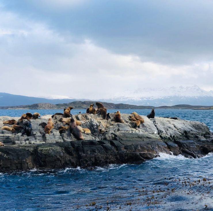Lions de mer - Isla de los Lobos - Canal de Beagle - Terre de Feu - Argentine