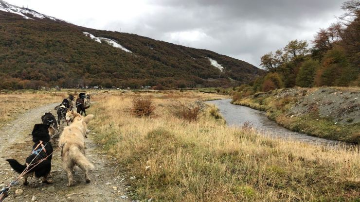 Petit tour en chiens de traineau - Elevage Siberianos de Fuego - Terre de Feu - Argentine