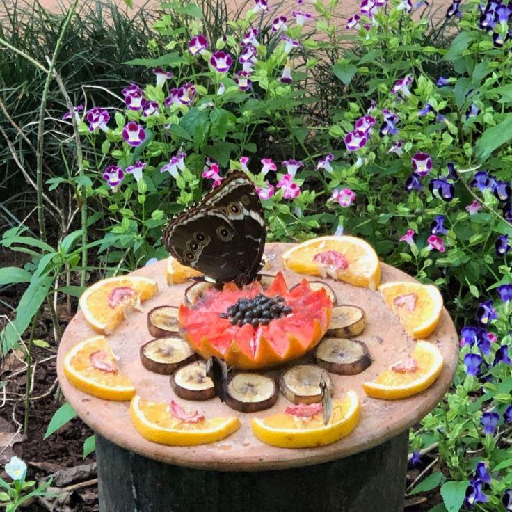 Nourriture pour papillons et colibris - Parque Das Aves - Iguazu - Brésil