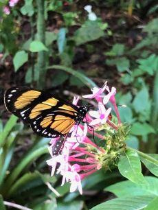 Papillon - Parc d'Iguazu