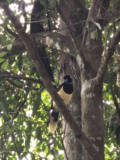 Oiseau - Parc d'Iguazu