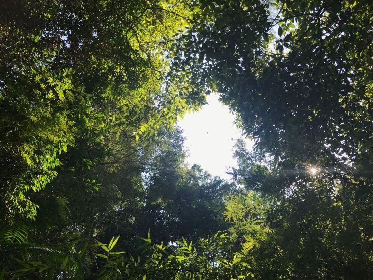 Forêt tropicale - Parc d'Iguazu - Argentine