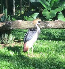 Oiseau dont j'ai perdu le nom - Parque Das Aves - Iguazu - Brésil