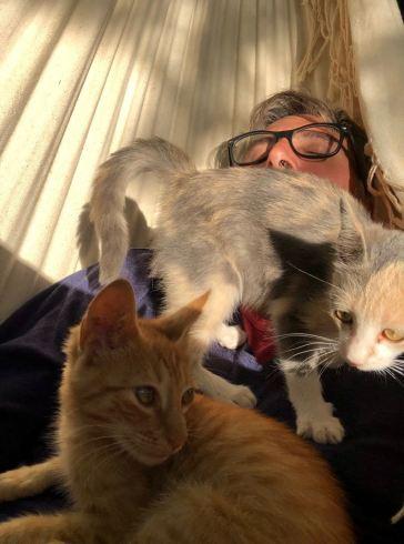 Un peu envahissants les chatons ? - Pampa - Argentine