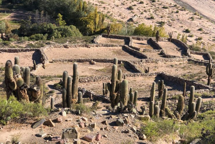 Cactus Candelabres et vieilles pierres - Pucara de Tilcara - Nordeste - Argentine