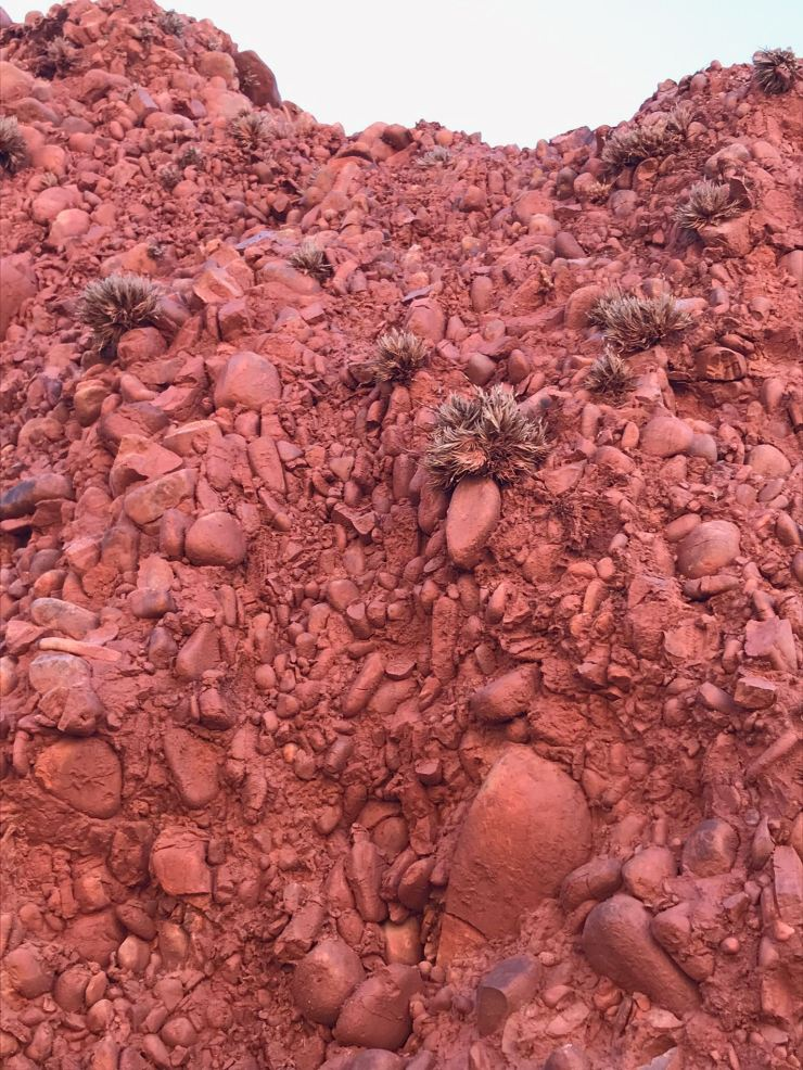 Roche écarlate et plantes résistantes ! - Quebrada de la senoritas - Uquia - Nordeste - Argentine