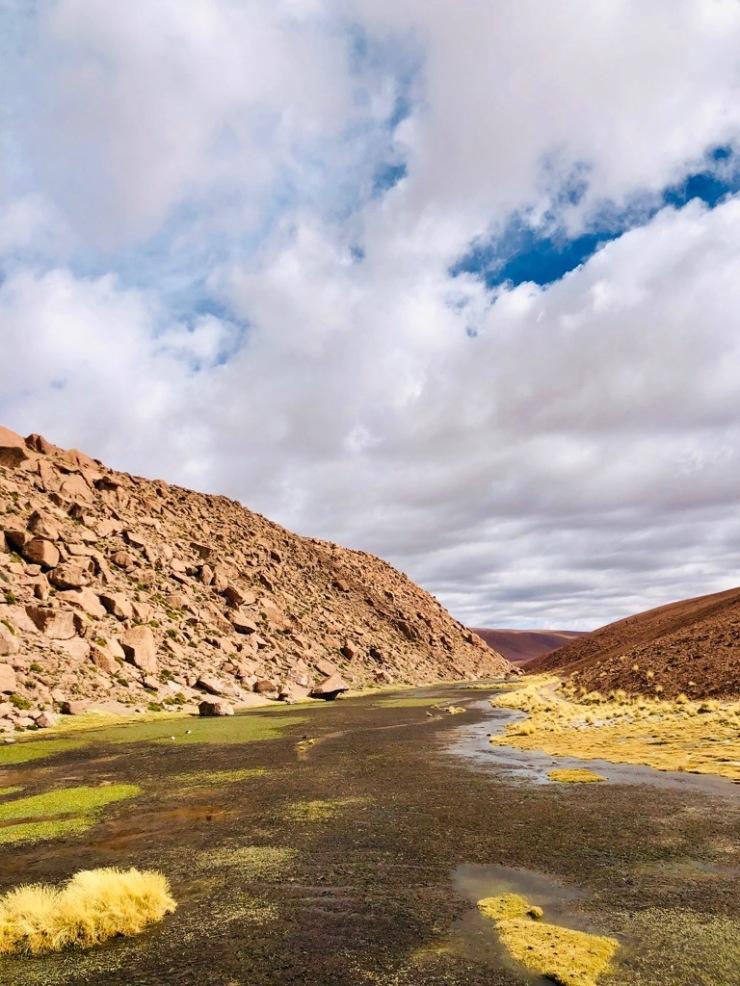 Altiplano- Désert d'Atacama - Chili