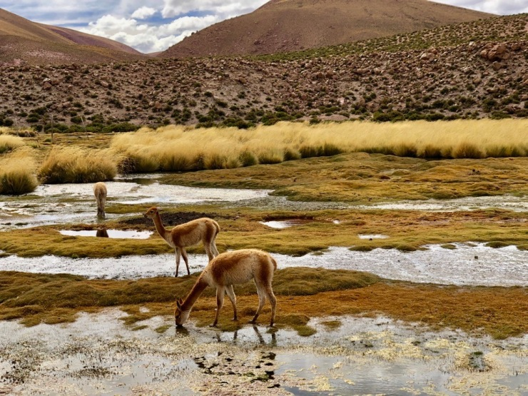 Altiplano - Désert d'Atacama - Chili
