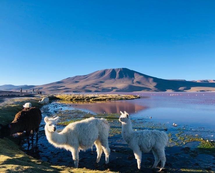 Laguna Colorada - Sud Lipez - Bolivie
