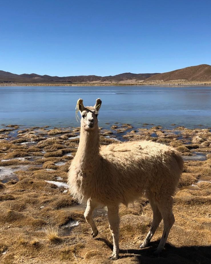 Laguna Escondida - Sud Lipez - Bolivie