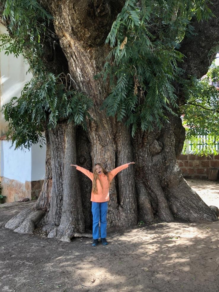 Eden devant le plus vieux cèdre de Bolivie - Sucre - Bolivie