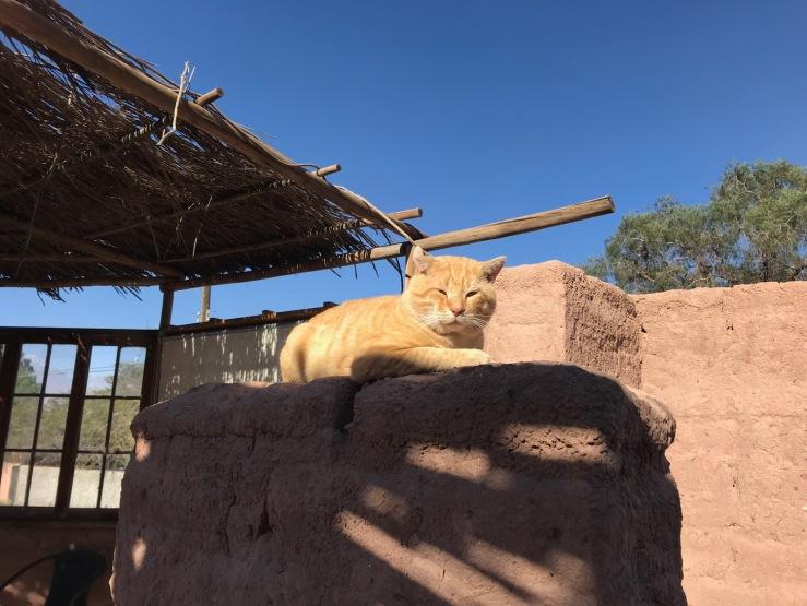 Au royaume des chats - San Pedro de Atacama - Chili